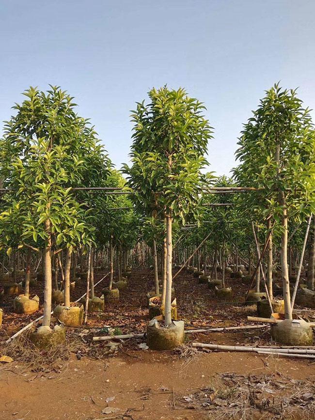 2019年全国林业产业总产值7.56万亿元