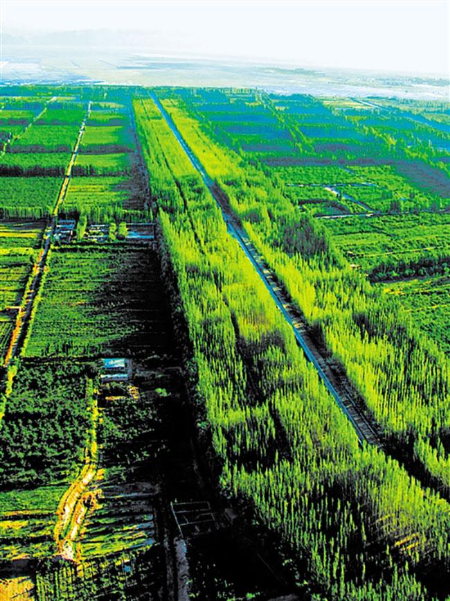 新疆农田林网建设保障农业丰收