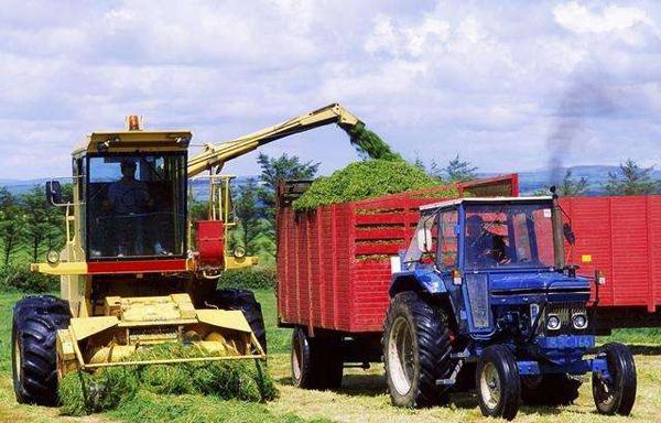 农村靠什么发家致富?农村发家致富项目有哪些?