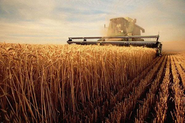 农业挣钱好项目有哪些?特色农业致富项目
