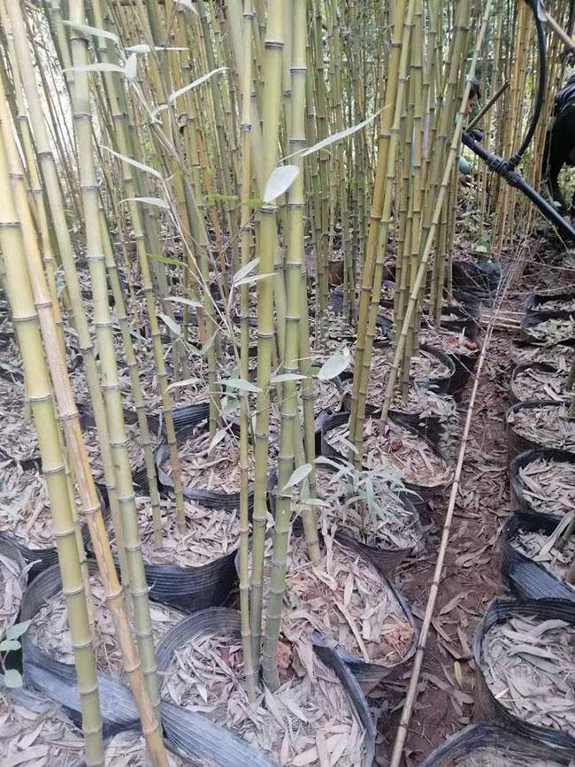 中国竹业开启新征程
