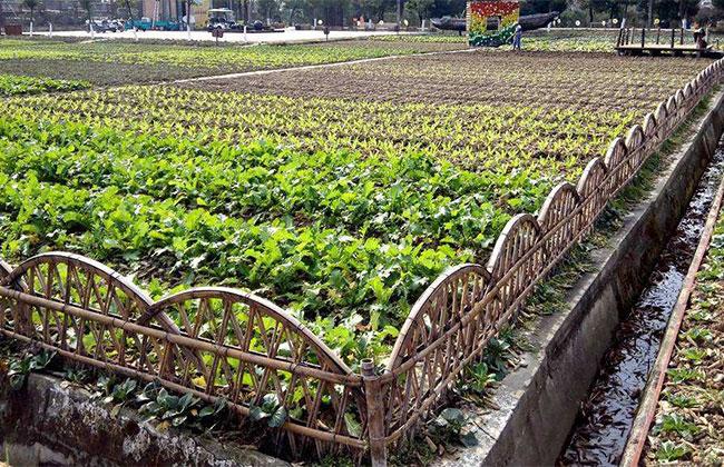 江西新增经济林种植面积60余万亩