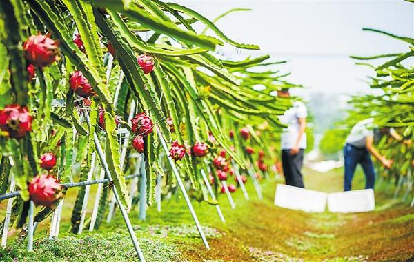 农村种植啥最赚钱?农村种植致富项目