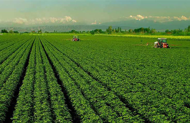 农业种植项目有哪些?农业致富好项目