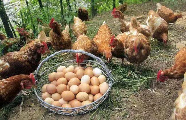 农村在家养殖赚钱项目有哪些?农业致富好项目