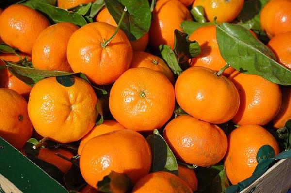 秋天成熟的水果有哪些?10种常见秋季水果