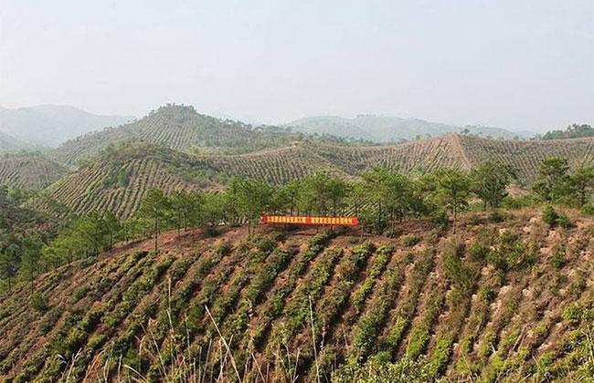 福建省70%以上林业龙头企业复工