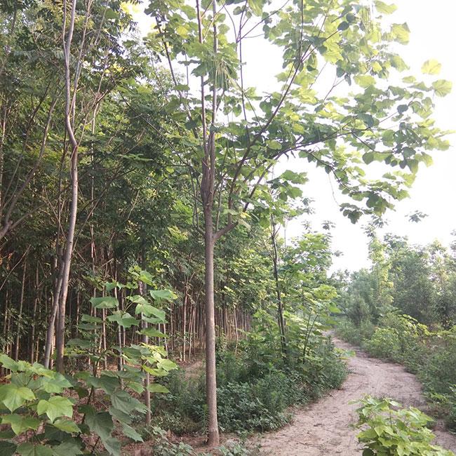 杭州绿道建设紧抓复工今年将新建改造500公里