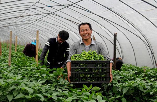 2020年农村4个项目获国家扶持