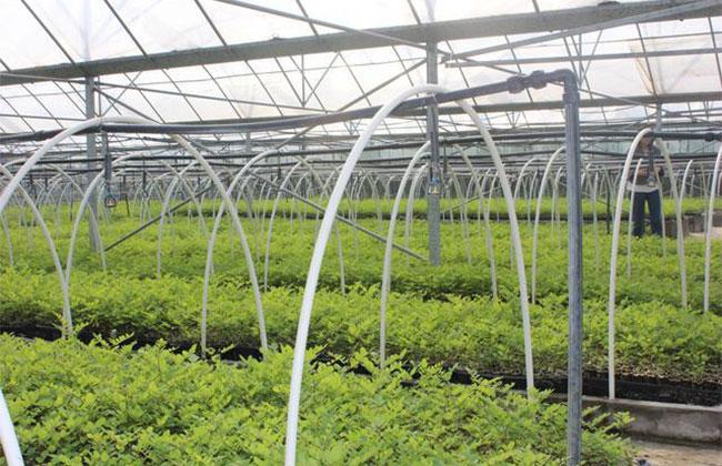 园林养护中密度调控的基本要求及密度判断标准