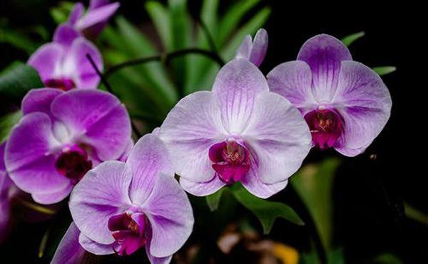 开花像动物的5种植物,家家户户都适合养一盆