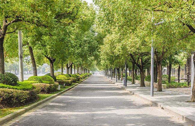 安徽省有序推进春季植树造林绿化