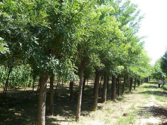 2020年全国苗木供需信息来了,这些品种有大需求!