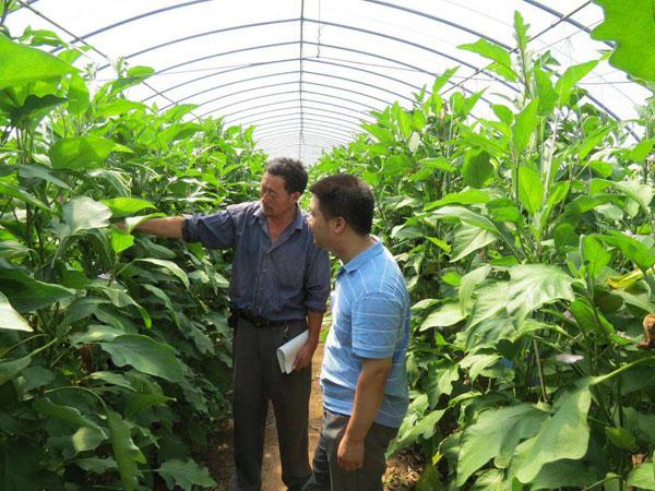2020年4类农作物不可种植,现在各地严查,农民千万要注意