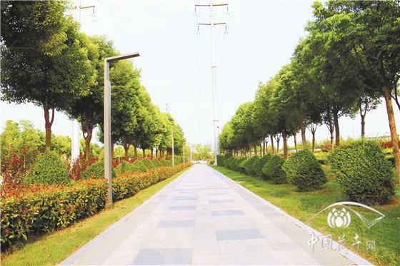 河南郑州航空港中央生态公园园林景观绿化工程