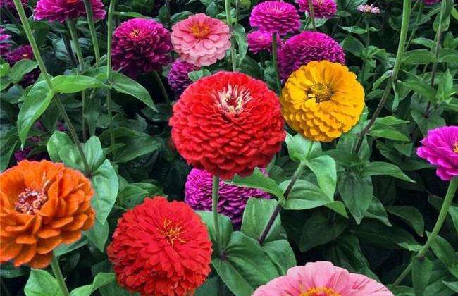 时令花卉价格恢复到去年同期水平