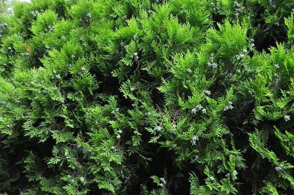 海拔1800适合种植什么树木?适合高海拔种植的树木