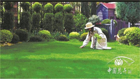 """让人""""怦然心动""""的草坪是如何建植与养护的"""