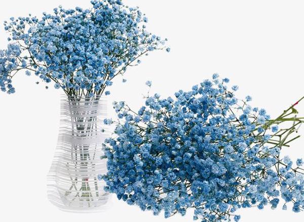 蓝色满天星的花语是什么?蓝色满天星的寓意和象征