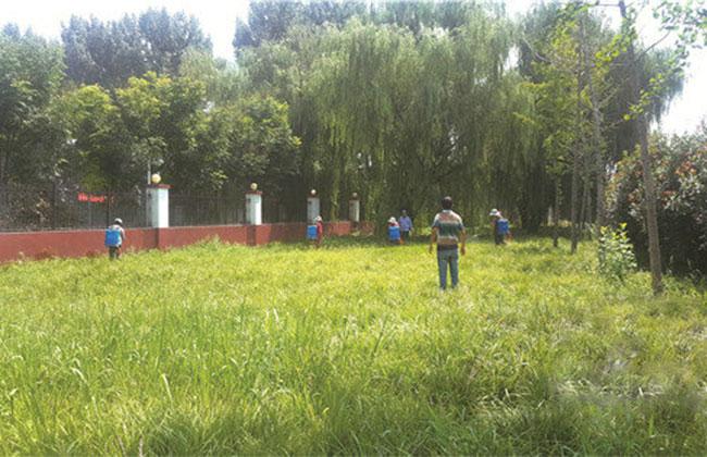 草坪草的种类有哪些?常见草皮种类介绍