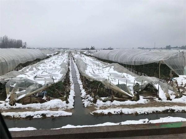 推行花卉保险 提高花农抗险能力势在必行