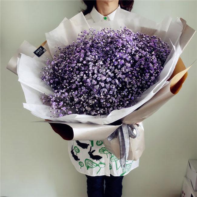 紫色满天星的花语是什么?紫色满天星的寓意和象征
