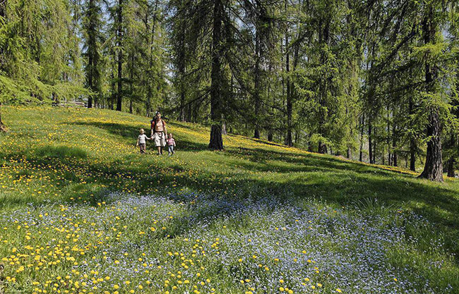 绿化缀花草坪怎么种?缀花草坪的组合原则