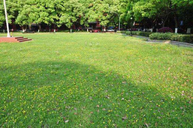 机场草坪品种有哪些?机场草坪的特点和要求