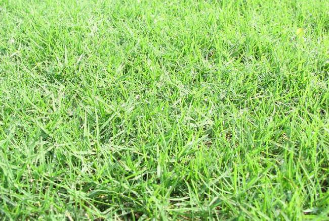 草坪每平米多少钱?草坪价格行情介绍