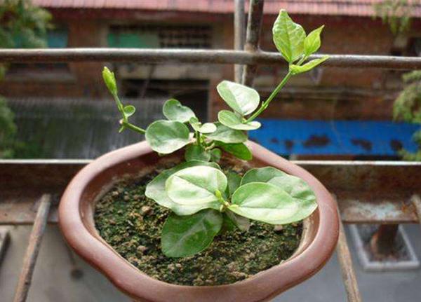 这5种花适合雨季扦插,生根速度很快