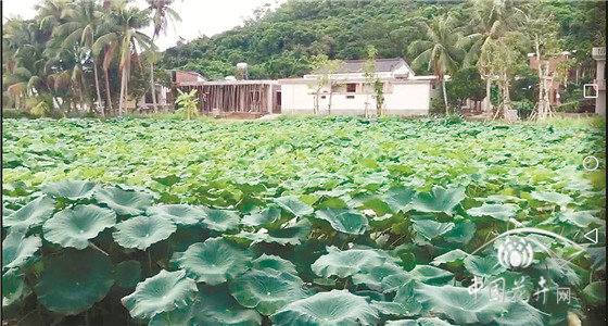 水生植物产业面临的问题及对策