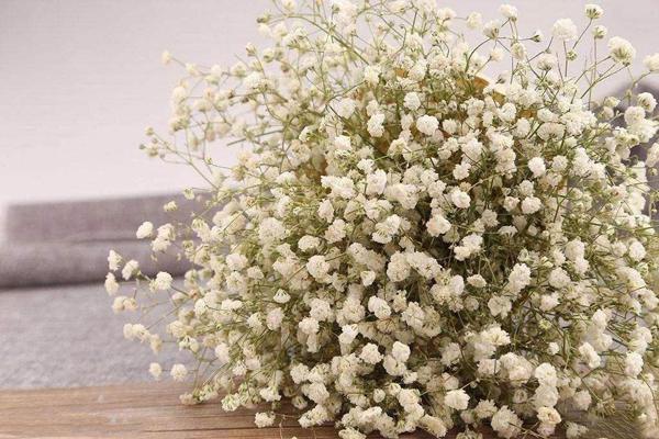 白色满天星的花语是什么?白色满天星的寓意和象征