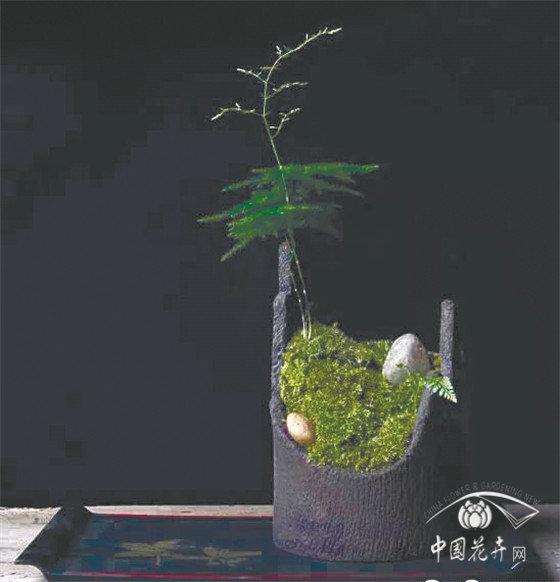 低调壮观的苔藓植物