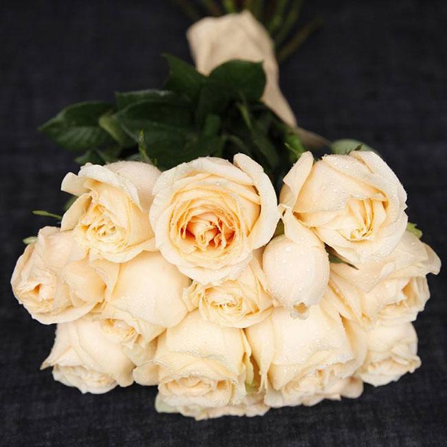 香槟色玫瑰的花语是什么?香槟色玫瑰的寓意和象征