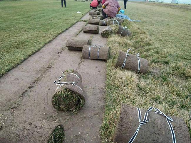 园林绿化草坪种类有哪些?常见绿化草坪价格行情