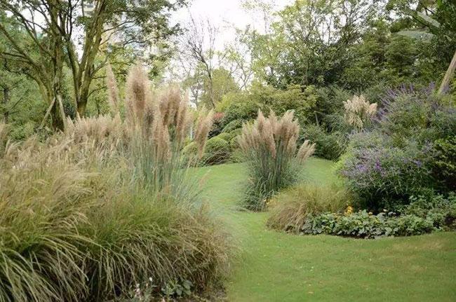 绿化草坪有哪些品种?常用草坪草种及其品种