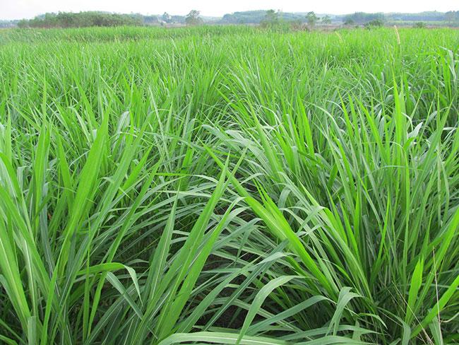 一亩地需要多少斤草籽?一亩地种多少草籽合适?
