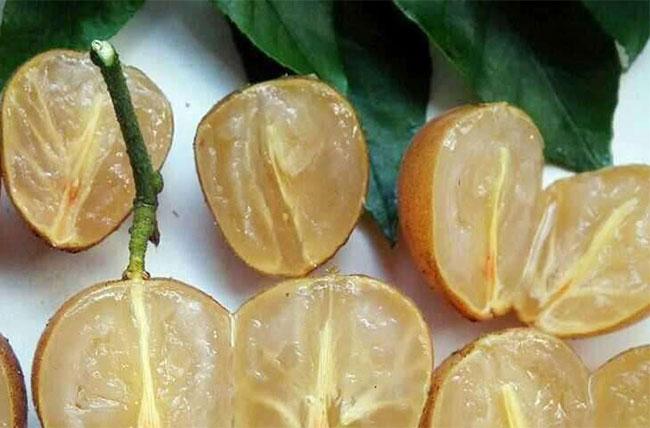 黄皮果的种植前景