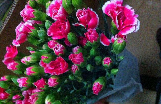 粉色康乃馨的花语是什么?粉色康乃馨的寓意和象征