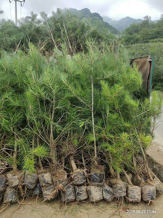 浙江公益林建设绿了青山惠了林农