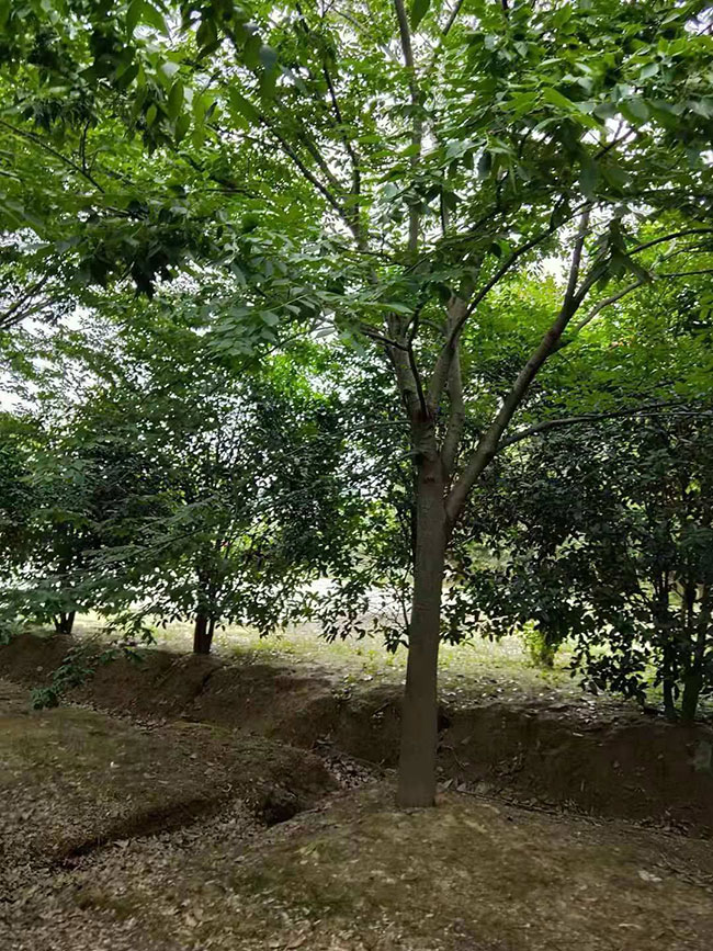江苏省常州市2020年造林绿化工作成效显著