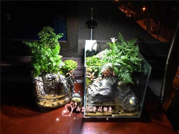 微景观生态瓶是什么?微景观生态瓶养殖方法