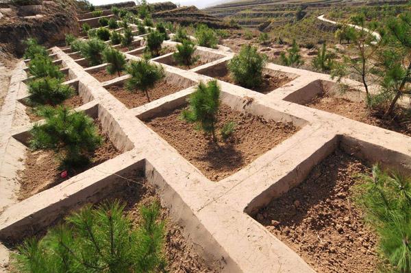 下半年苗木行业的政策红利要变现,机会来了!