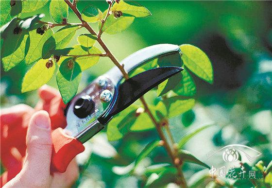 立秋后的苗木养护除草之外还有这些要注意