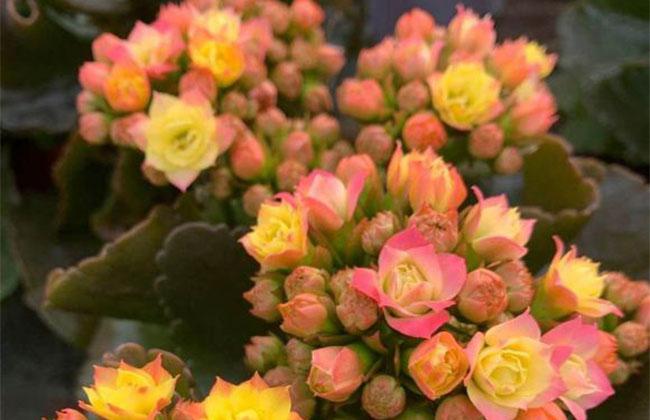 9月养这些花,快速开花花期长