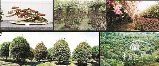 先抑后扬,上半年温江花木卖了12亿