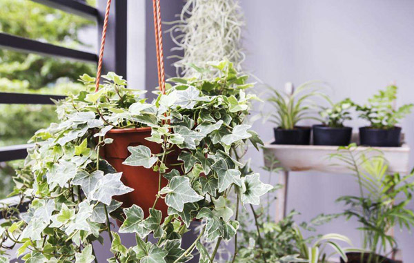 卫生间养花的条件?卫生间养花如何打理?