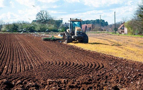 """禁止耕地""""非农化"""",苗木人如何应对?"""