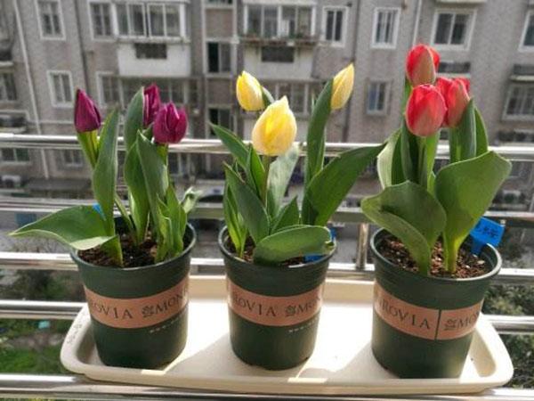 适合秋季种植的6种花,现在不种就晚了!