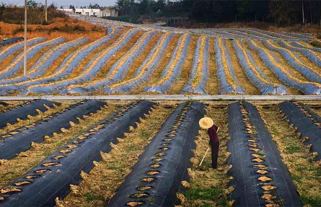 农村承包土地一亩补贴少钱?看看政策规定!
